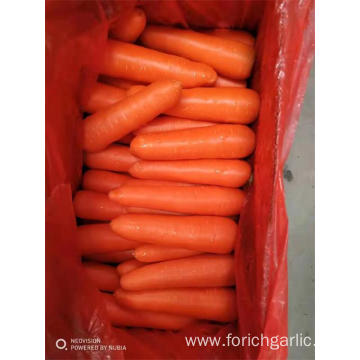 Fresh Carrot Crop 2019 Good Quality